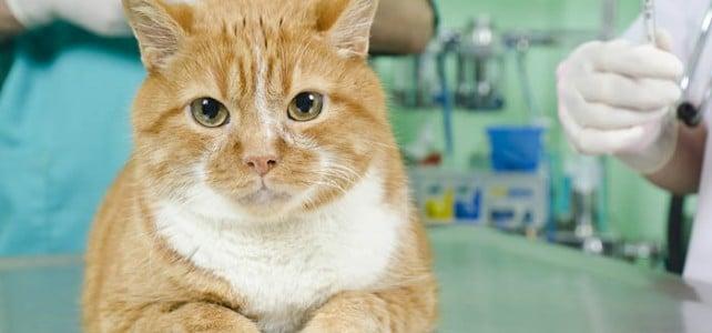 Стерилизация кошек