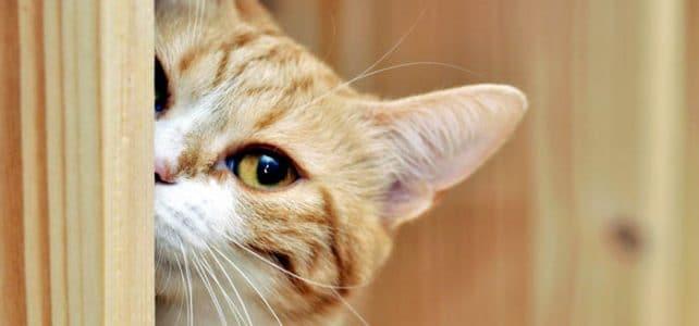Специальная цена на кастрацию котов