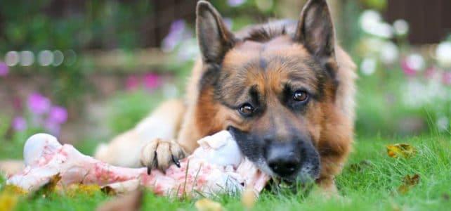 Можно и нужно ли давать кости собаке?