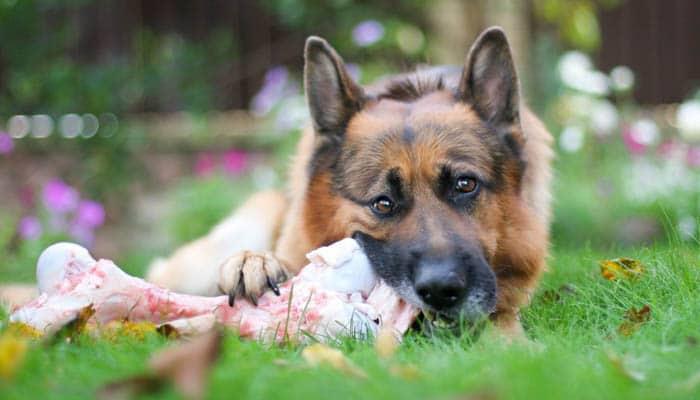 когда давать собакам таблетки от глистов