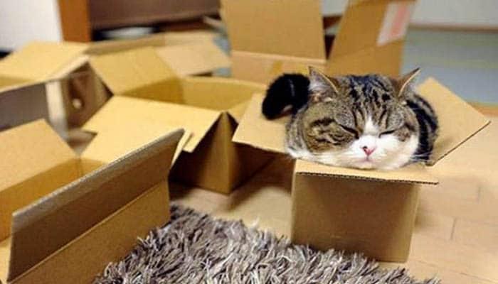 Кошка в картонной коробке