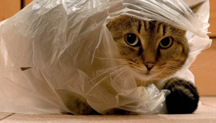 Кошка в целлофановом пакете