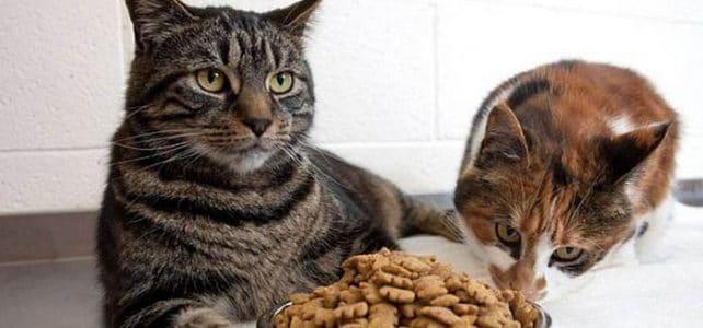 А вы правильно кормите вашего любимого котика?