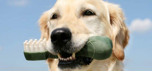 Когда начинают меняться молочные зубы у собак?