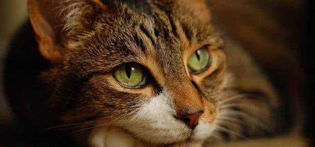 Стригущий лишай или дерматофитоз кошек и собак